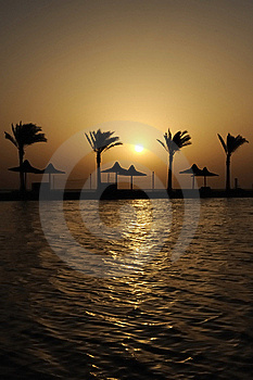 Palm Trees Stock Photography - Image: 17582192