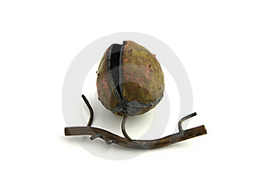 Metal Chestnut Decoration Royalty Free Stock Images - Image: 17589189
