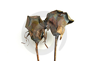 Two Metal Rose Decorations Royalty Free Stock Photo - Image: 17589215