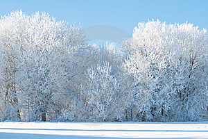 Frozen Trees on the field Stock Photo