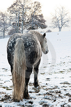 Dapple Horse Royalty Free Stock Photos - Image: 17618948