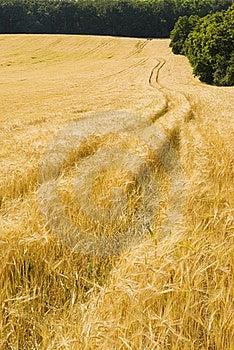 Agriculture Farmland Field Landscape Stock Image - Image: 17622801