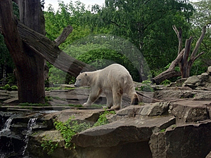 Knut Stock Photography