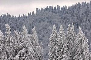 Svart Feldbergskog Germany Royaltyfri Foto - Bild: 17630935