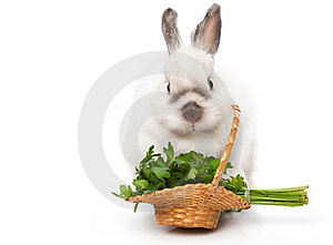 A Funny Rabbit With A Basket Of Greens Royalty Free Stock Image - Image: 17634876