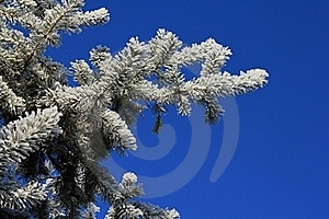 Frozen Branch Stock Image - Image: 17638901