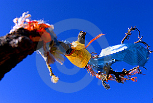 Sutra Streamer On The Tree Royalty Free Stock Image - Image: 17639636