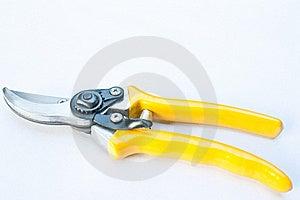 Scissor Pruning Stock Photo - Image: 17651680