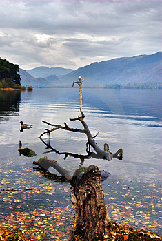 Gull Perched On Branch In A Lake Royalty Free Stock Image - Image: 17653226