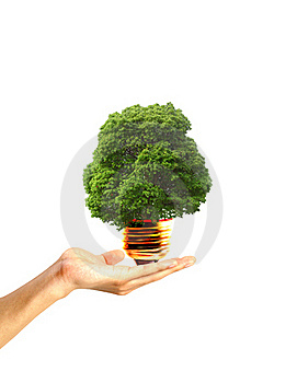 Tree In A Light Bulb Royalty Free Stock Photo - Image: 17657445