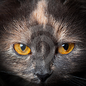 Cat eyes. Stock Image