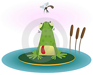 Frog And Gnat Royalty Free Stock Photo - Image: 17669155