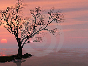 Tree Royalty Free Stock Photos - Image: 17669258