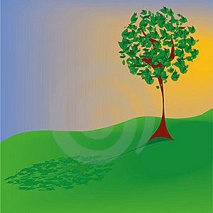 Summer Tree Stock Image - Image: 17671961