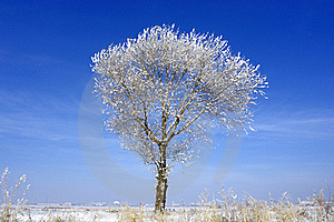 Hoard Frost Stock Photos - Image: 17680963