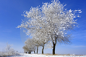 Hoard Frost Royalty Free Stock Photo - Image: 17681045