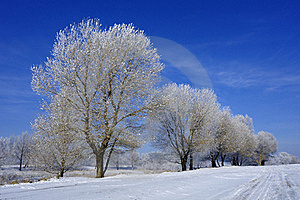Hoard Frost Stock Images - Image: 17681174