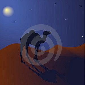 Camel At Night Royalty Free Stock Image - Image: 17681286