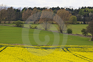 Fields Stock Photo - Image: 17685010