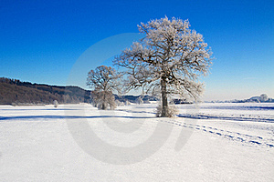 Trees Covered With Hoarfrost Royalty Free Stock Images - Image: 17687819