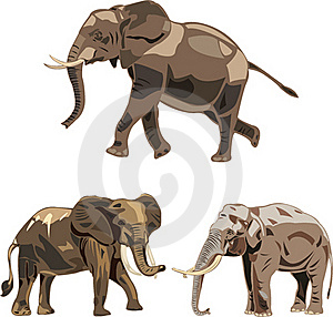 The World's Three Kinds Of Elephants Royalty Free Stock Images - Image: 17690399