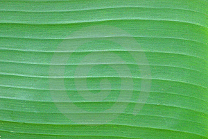 Banana Leave Pattern Royalty Free Stock Photos - Image: 17700248
