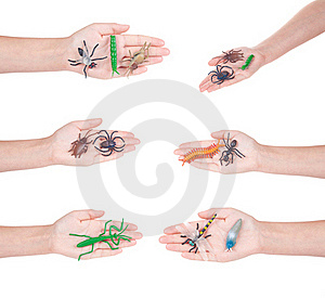 Insects In A Female Hand, Isolated Royalty Free Stock Image - Image: 17709236