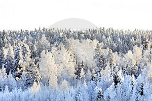 Snowy Forest Royalty Free Stock Image - Image: 17709946