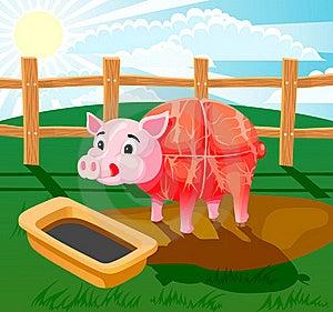 Pig Sausage Stock Photography - Image: 17712372