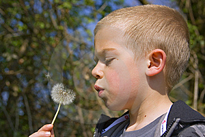 Six Year Old Boy Blowing A Dandelion Stock Photos - Image: 17723193