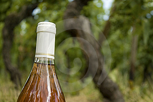 Wine Bottle, In A Vineyard. Stock Images - Image: 17723844