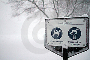 Dog Park In A Snow Storm Stock Photo - Image: 17727450