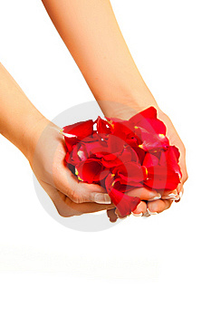 Red Rose Petals In Woman's Hand Isolated Royalty Free Stock Photos - Image: 17728548
