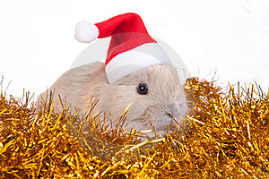 Brown Rabbit In Santa Hat And Christmas Decoration Royalty Free Stock Photography - Image: 17730767