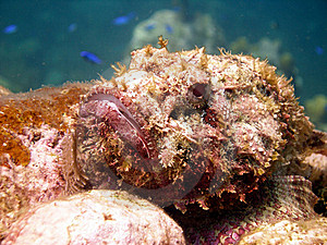 Ugly Scorpion Fish Stock Photography - Image: 17732022