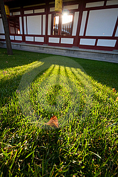 Leaf Shining In The Sun Royalty Free Stock Image - Image: 17735616