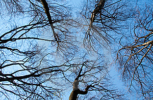 Branches Silhouettes On Blue Sky Royalty Free Stock Photo - Image: 17745735