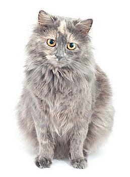 Gato Gris. Fotografía de archivo libre de regalías - Imagen: 17748347