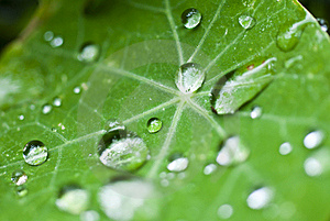 Drops On The Leaf Stock Image - Image: 17749631