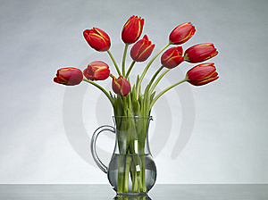 Red Tulips Royalty Free Stock Photos - Image: 17761808