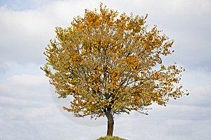 Lonely Tree Stock Photo - Image: 17762830