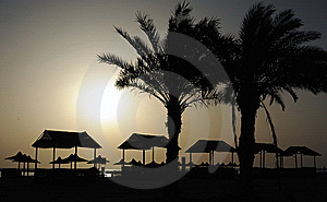 Palm Trees Royalty Free Stock Photo - Image: 17764365