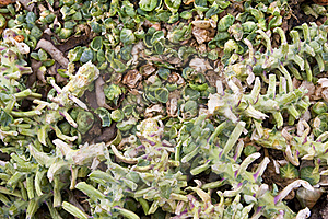 Emptied Sprouts Stems Stock Photos - Image: 17771403