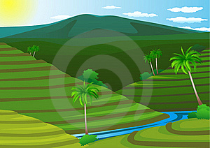 Terrace Rice Field Royalty Free Stock Photos - Image: 17775078