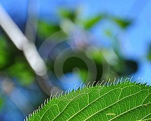 Leaf's Edge Royalty Free Stock Image - Image: 17785636