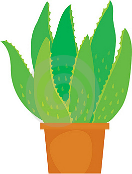 Aloe Vera Plant Royalty Free Stock Images - Image: 17787019