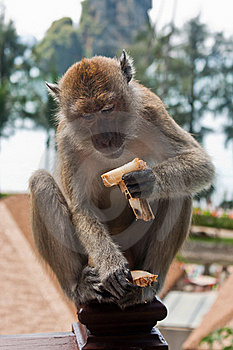 Monkey Sat On Hotel Balcony Eating Stock Photography - Image: 17792852