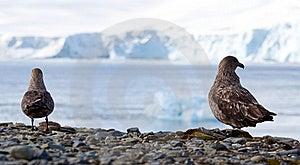 Bird View Royalty Free Stock Image - Image: 17796176