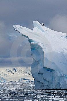 Iceberg Bird Stock Images - Image: 17796784