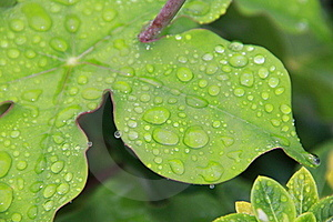 Drops Of Life Royalty Free Stock Photos - Image: 17823278